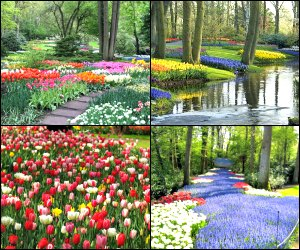 Things to do in Amsterdam - Keukenhof gardens, Tulip Farm, flower blossom tours