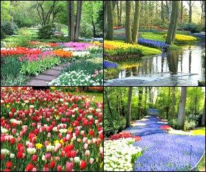 Things to do in Amsterdam - Keukenhof gardens, Tulip Farm, flower blossom tours