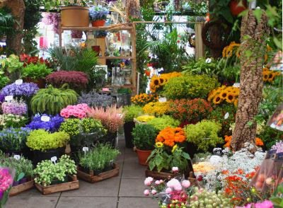 shopping in amsterdam, things to do in amsterdam